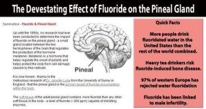 flouride-pineal-2