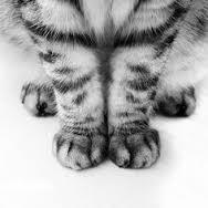 kitten feet