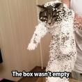 box not empty