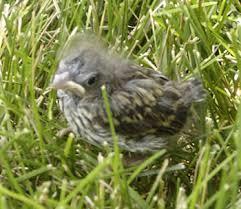 Rescuing baby birds