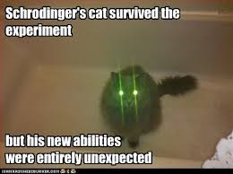 Phenomenology isn't just in your head – Its about the cat in thebox…
