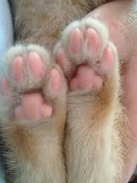 On Kitten Feet…