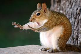 Squirrel! Errr maybe…